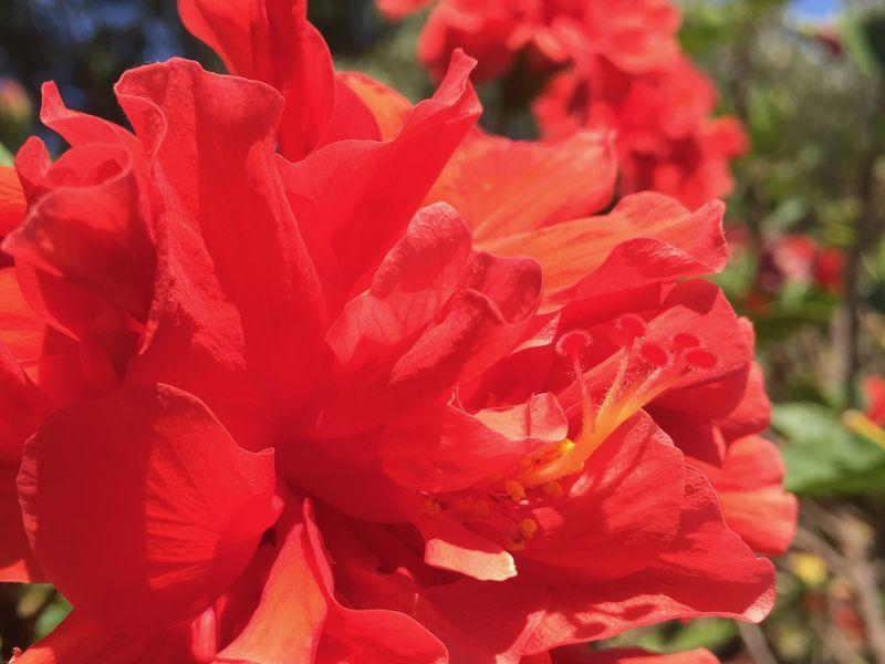 fiore-autostima-benessere.jpg